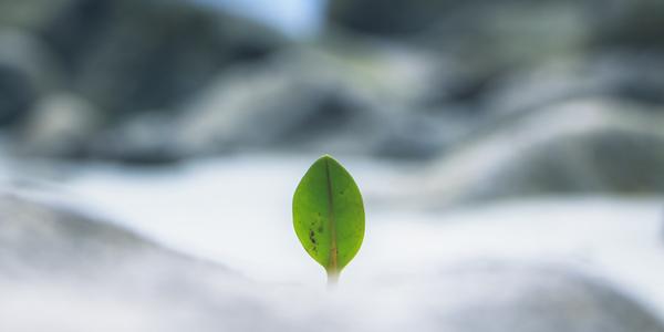 Blatt, © unsplash/Pinakheen Bhat